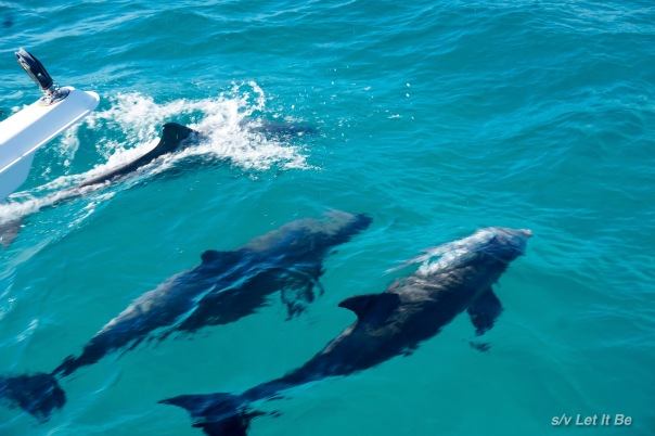 dalphins.jpg