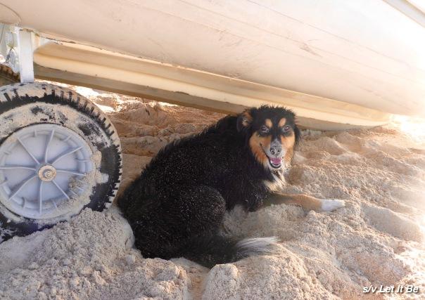 sandy dog.jpg