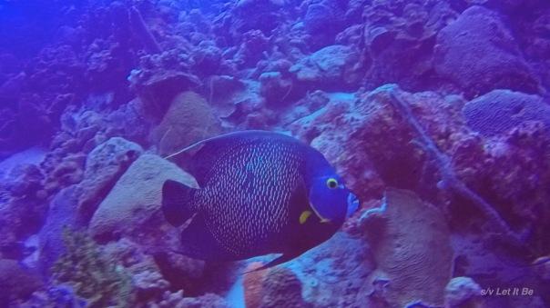 Bonaire-3