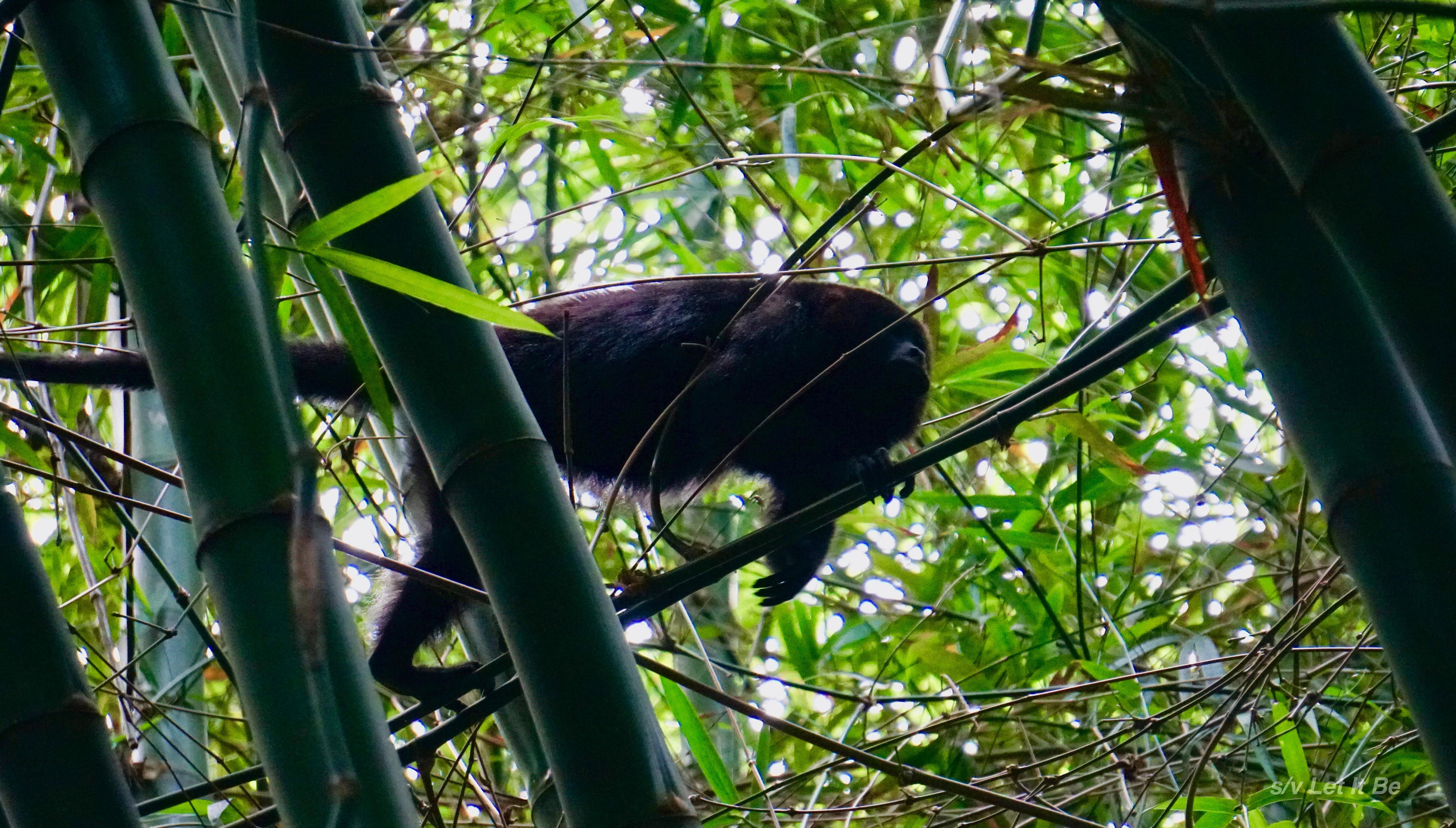 Monkey River-8